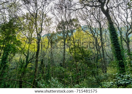 Forest in the Putuoshan mountains, Zhoushan Islands,  a renowned site in Chinese bodhimanda of the bodhisattva Avalokitesvara (Guanyin)