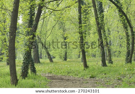 Forest in the spring  - stock photo