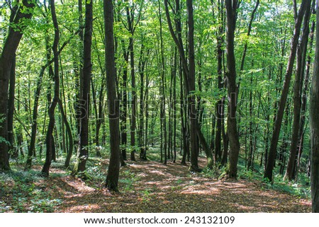 Forest in the sunshine - stock photo