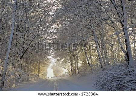 Forest in the warm light from the sunset. Jutland, Denmark, Scandinavia - stock photo