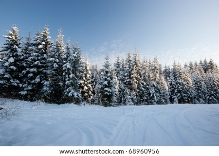 Forest in winter, beautiful Christmas time in Latvia, Baltic states, Europe - stock photo