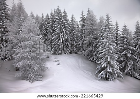Forest in winter covered by snow - stock photo