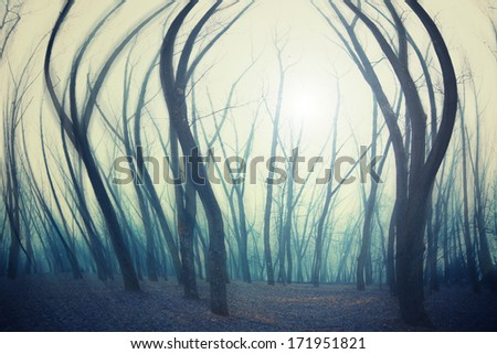 forest in winter morning - stock photo