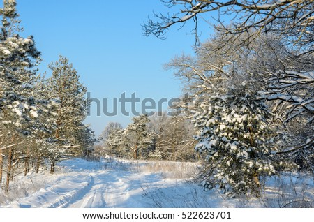 Forest in winter sunny day