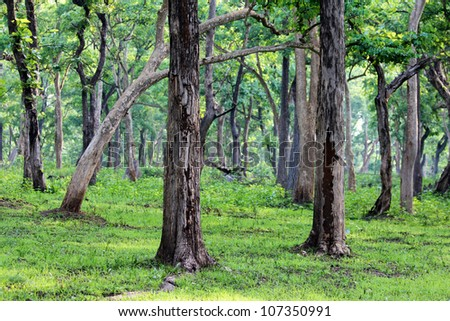 Forest, India