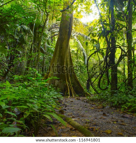 Forest. Jungle background. Tropical rain forest with green trees, bushes and foliage. Outdoor hike road in Thailand  - stock photo