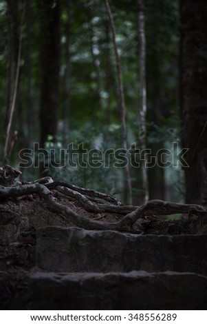 Forest. Jungle tropic rain forest photography. Scenic nature background - stock photo