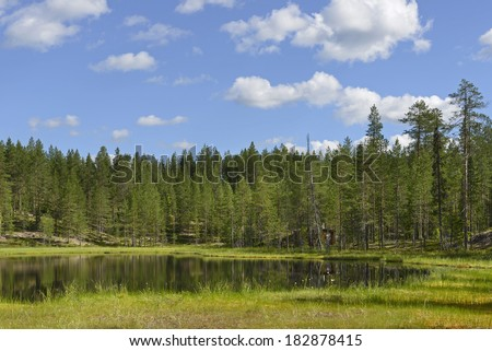 Forest Lake - stock photo