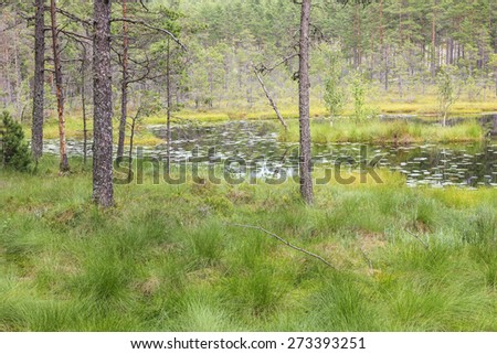 Forest lake in taiga wilderness - stock photo