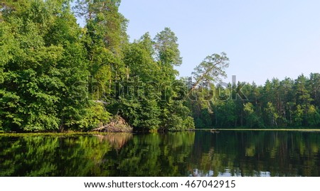 Forest lake landscape with leaning pine