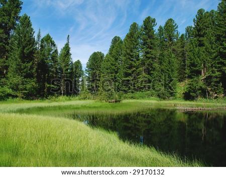 Forest lake, wild landscape - stock photo