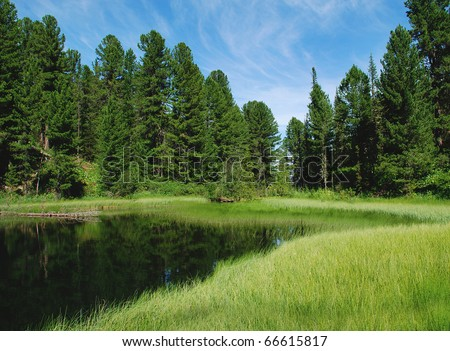 Forest lake, wild landscape, Altai, Russia - stock photo