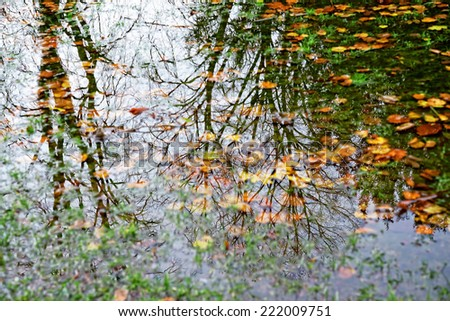 Forest lake with reflections of trees and fallen leaves in cloudy day. Focus on trees - stock photo