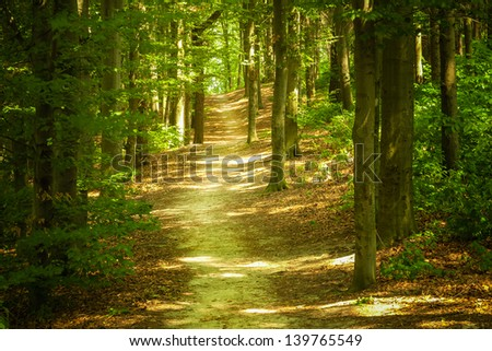 Forest landscape - stock photo
