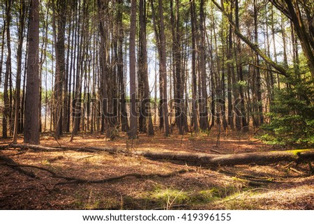 Forest landscape. Empty forest background. - stock photo