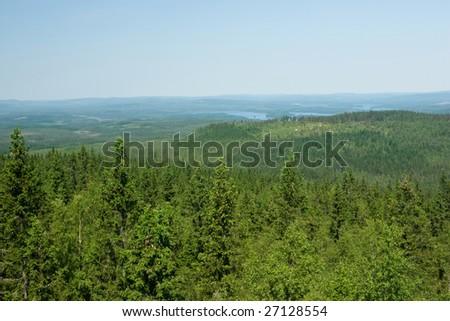 Forest landscape, Finland - stock photo