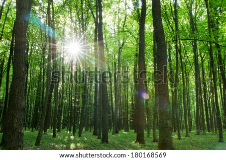 forest landscape in the morning - stock photo