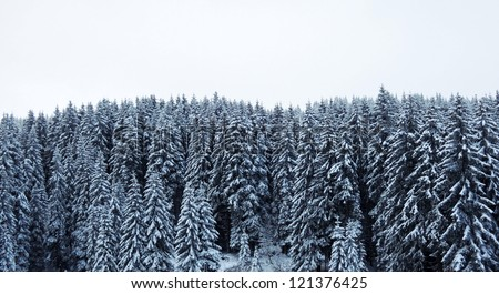 Forest  landscape in winter - stock photo