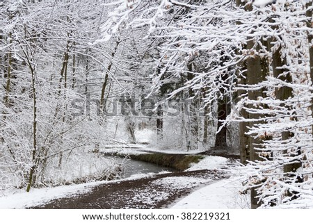 Forest landscape in winter under a blanket of snow