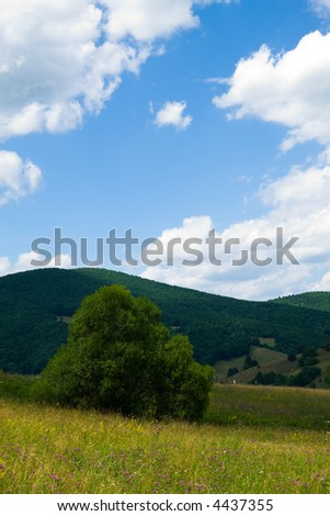 Forest landscape on a beautiful sunny day - stock photo