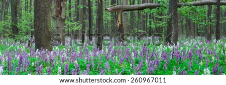 Forest landscape panorama. Spring flowers. Beauty in nature - stock photo