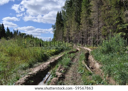 Forest landscape with dirt road, Russia