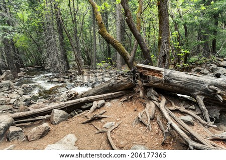 Forest landscape with fallen tree on the stones - stock photo