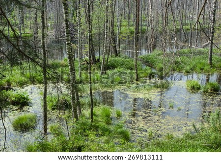 Forest landscape with marsh.