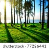 forest landscape with sea and fresh grass - stock photo