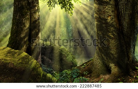 Forest landscape with sunbeams, mist, mossy rocks - stock photo