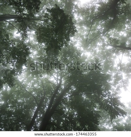 Forest landscape with treetops in the fog - stock photo