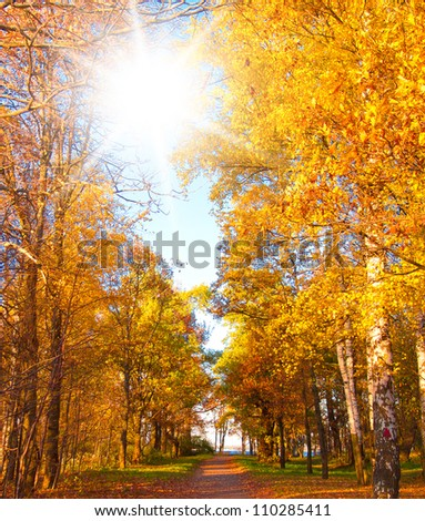 Forest Landscape Yellow Trees - stock photo