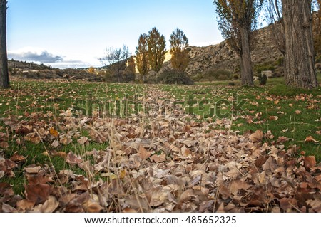 forest, leaves on the ground, autumn