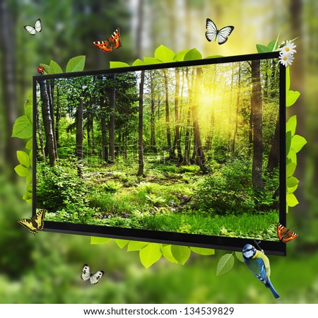 Forest Life shows on the TV screen - stock photo