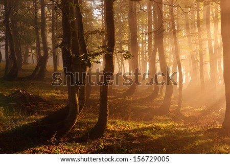 Forest lighted by sunbeams in the misty morning - stock photo