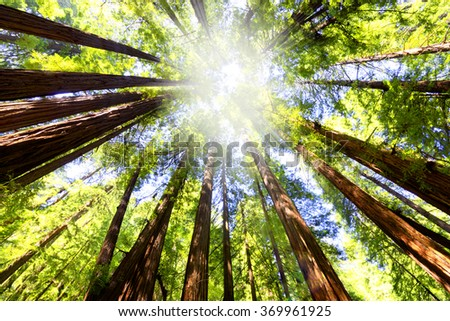 Forest low angle view - stock photo