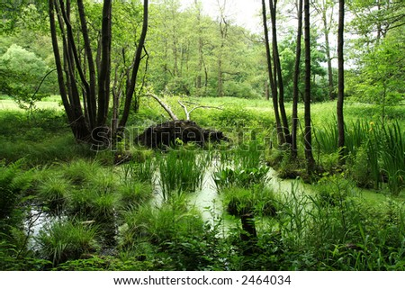 Forest marshland - stock photo