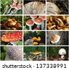 forest mushroom photo collection - stock photo