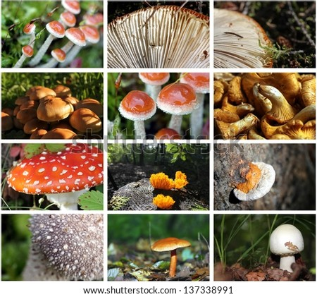 forest mushroom photo collection