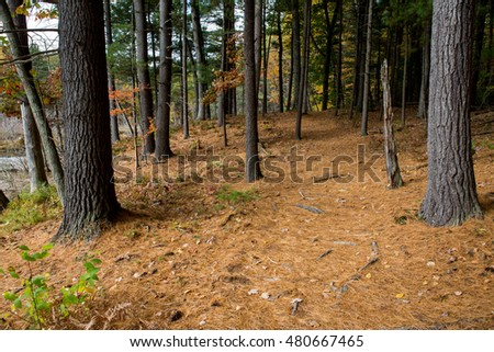 Forest next to the Walden Pond in Massachusetts in autumn