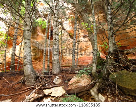 Forest of Aspen in Slot Canyon - stock photo