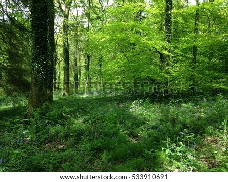 Forest of Dean in spring, UK