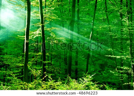 Forest of dreams - stock photo