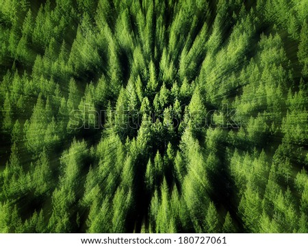 Forest of green pine trees on mountainside with late afternoon sunlight and zoom blur - stock photo