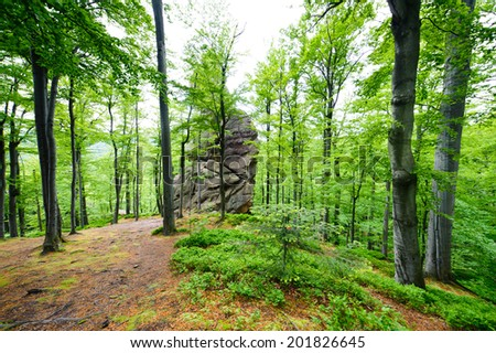 forest of large stones and rocks