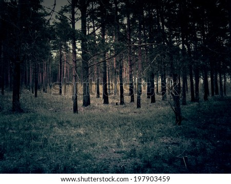 Forest of pine in the Moscow region in spring time, vintage photo effect. - stock photo