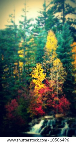 forest of pines trees and aspen with small stream in autumn season - stock photo