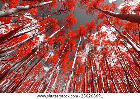 Forest of red trees on a black and white background - stock photo