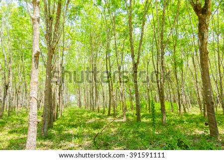 Forest of southern Thailand in morning:Close up,select focus with shallow depth of field:ideal use for background.