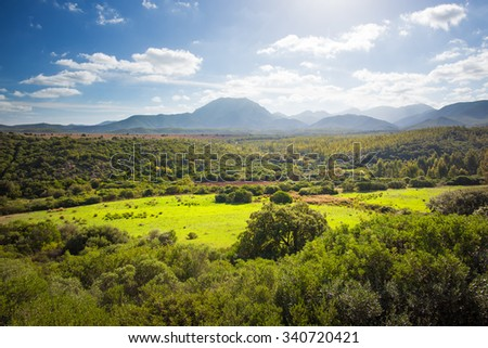 Forest of trees illuminated by the sun in backlit with green field on the middle  - stock photo